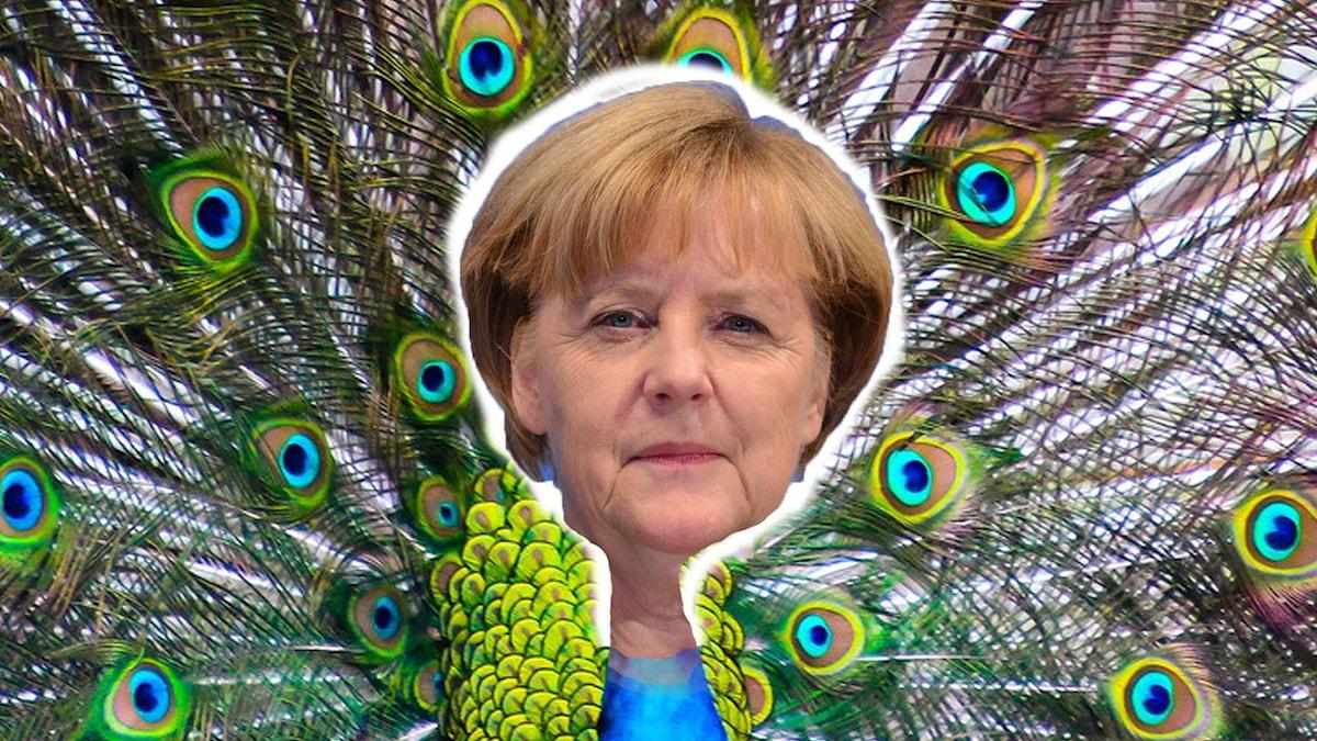 Foto: Flickr / www.GlynLowe.com / Angela Merkel, CDU Election Rally in Hamburg / LadyDragonflyCC - >;< / Peacock / CC BY 2.0