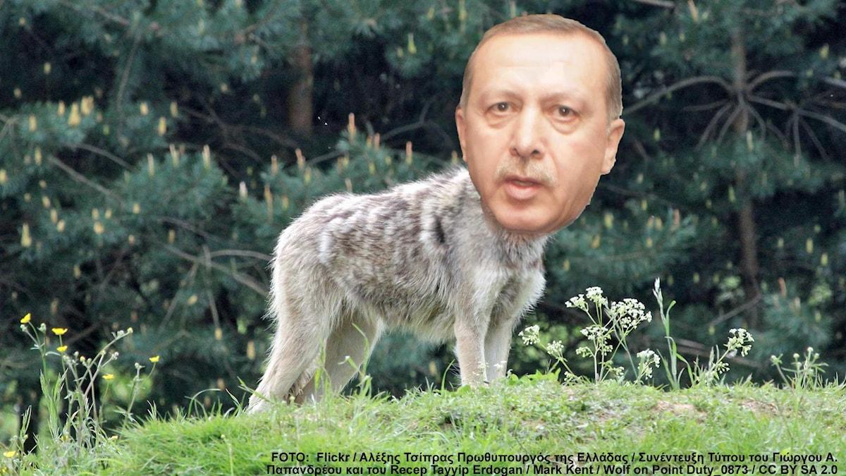Foto:  Flickr / Αλέξης Τσίπρας Πρωθυπουργός της Ελλάδας / Συνέντευξη Τύπου του Γιώργου Α.  Παπανδρέου και του Recep Tayyip Erdogan / Mark Kent / Wolf on Point Duty_0873 / CC BY SA 2.0