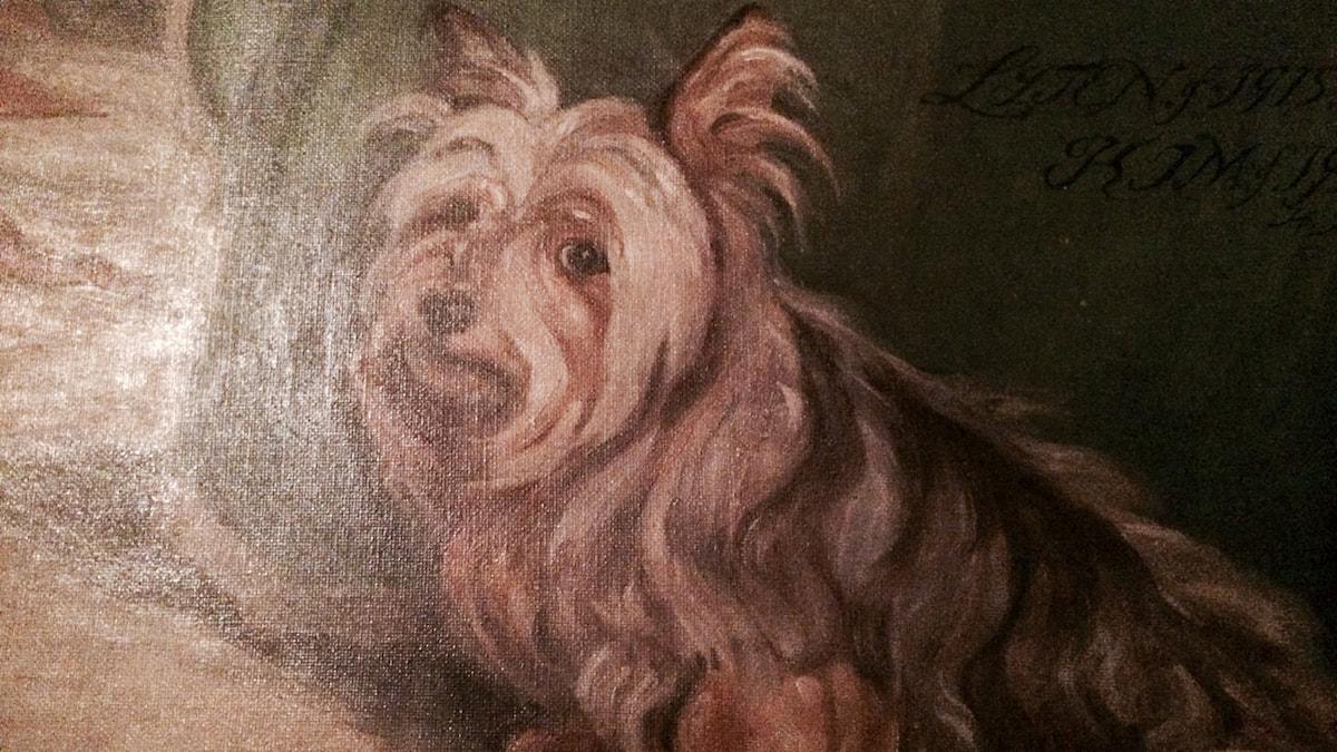 Liten, en av Zorns 22 hundar
