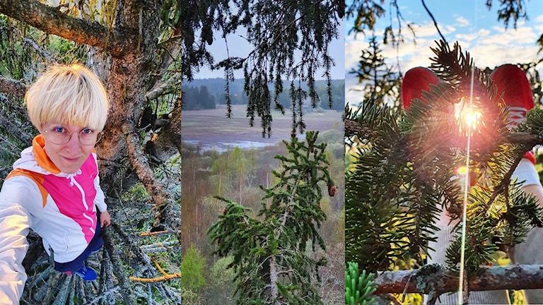Jenny Soddus egna bilder från trädtopparna. Hon filmar och klipper själv sina videos
