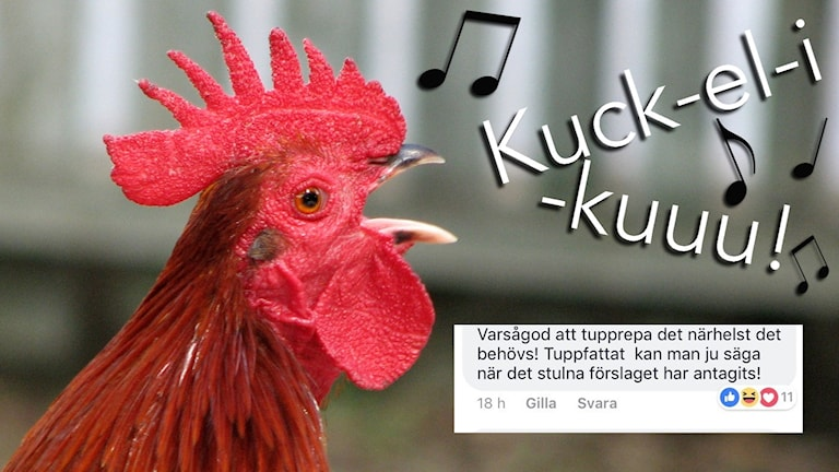 """Tupp som galer med texten """"Kuck-el-i-kuuu!"""""""