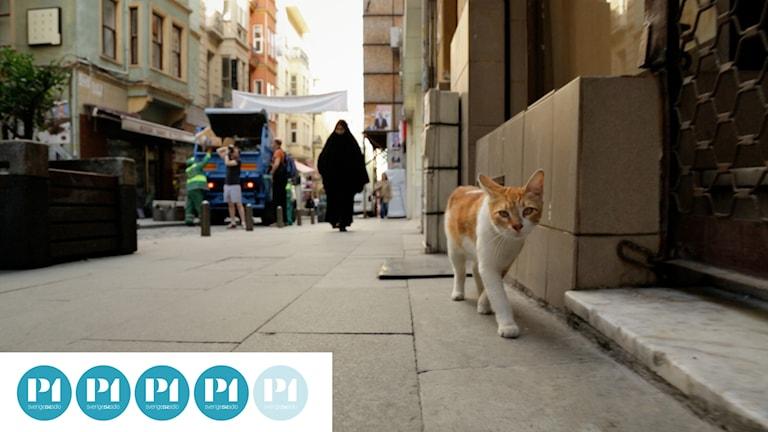 """Katt i dokumentären """"Kedi""""."""