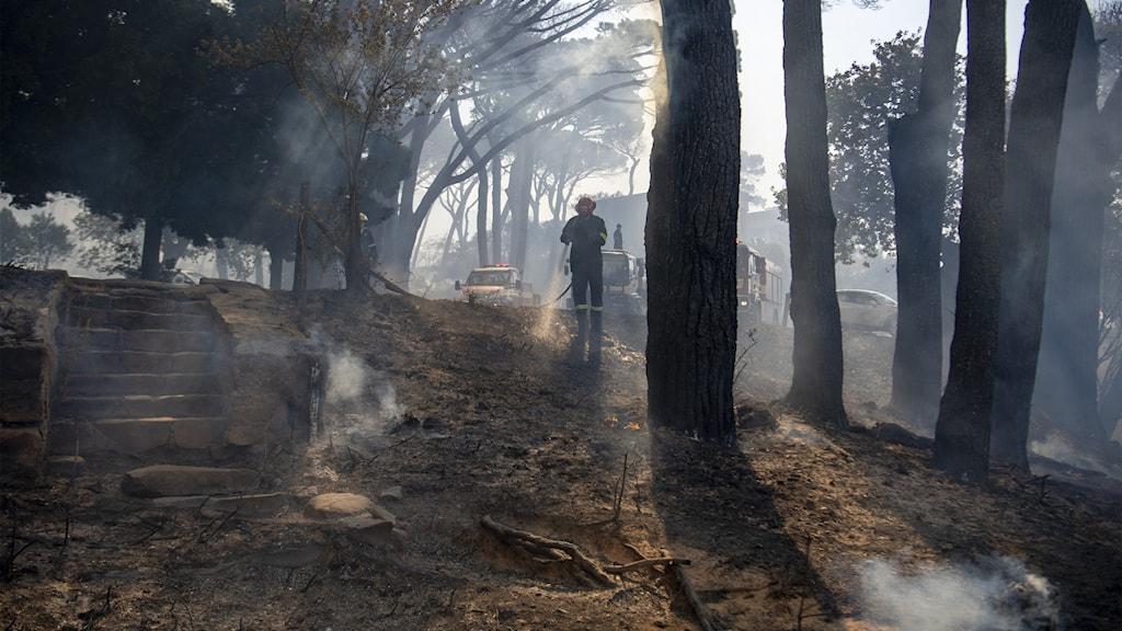 Brandmän släcker eld på sluttning.