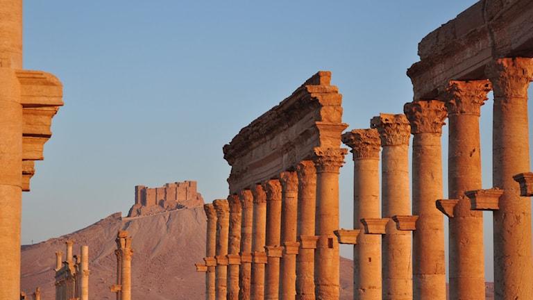 Palmyra. Foto: Silvan Rehfeld/TT