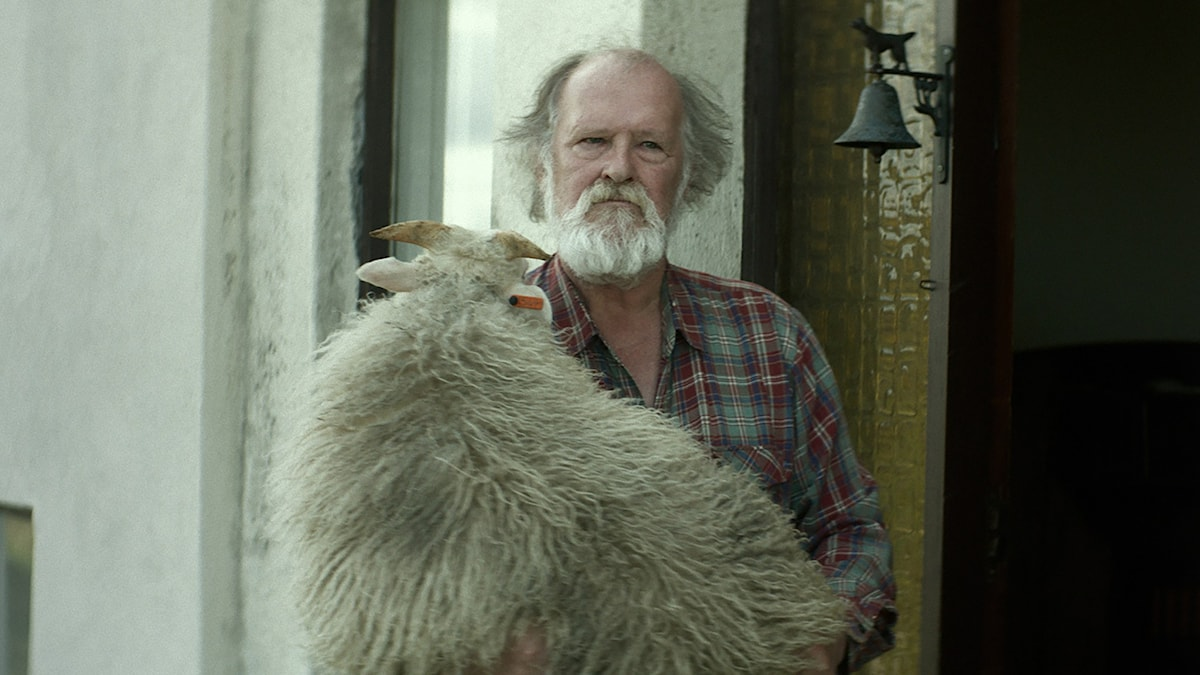 Theodór Júlíusson i Bland män och får.