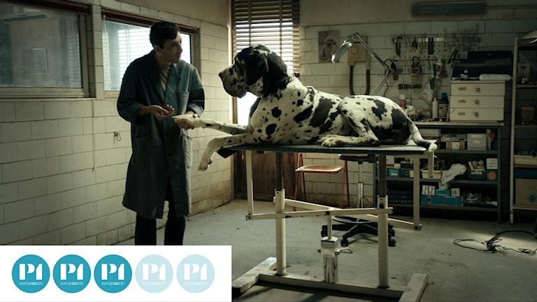 "Marcello Fonte som ""Dogman"" i filmen med samma namn."