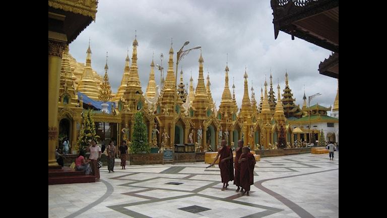 Munkar vid Schwedagonpagoden i Rangoon där munkarna började sina protester i september 2007 Foto: Margita Boström