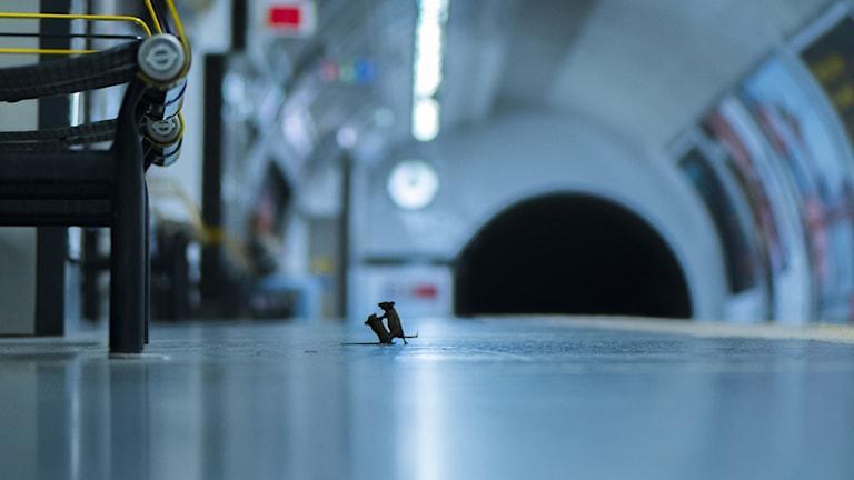 Sam Rowleys bild av två möss som slåss på en tunnelbanestation i London har fått ett pris för bästa naturfoto.