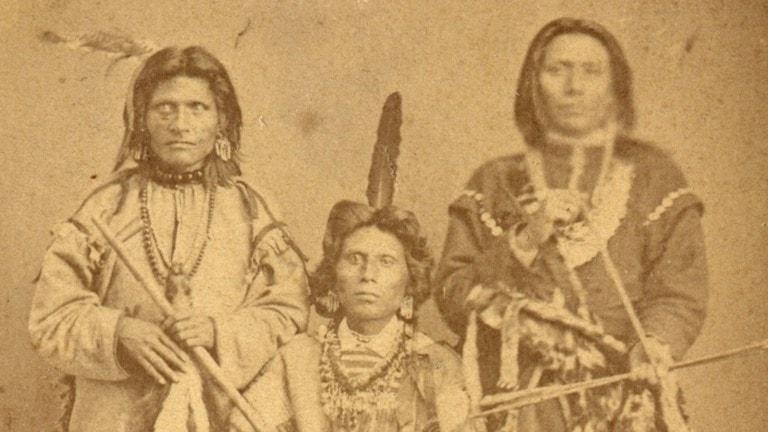 Bilden föreställer Red fox White fox och Wihte eagle i Sverige 1874