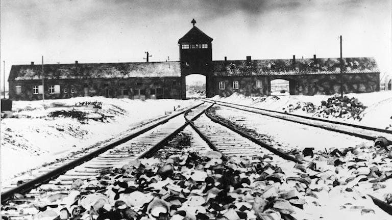 Tågrälsen in  till Auschwitz-Birkenau