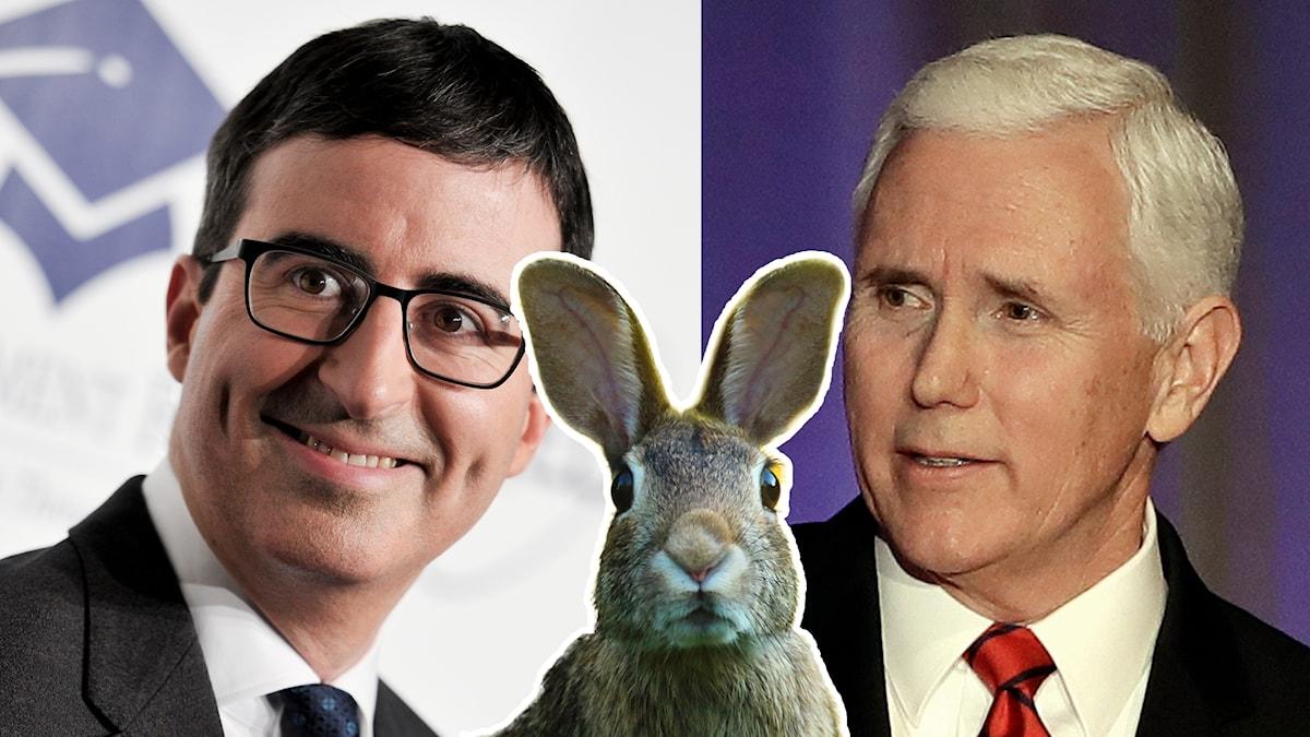 John Oliver och Mike Pence, med en kanin i mitten.