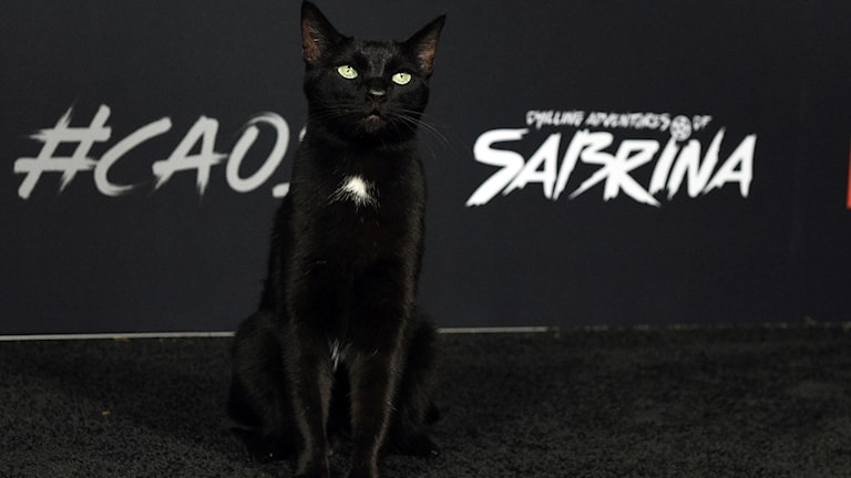 "En svart katt på premiären för ""The chilling adventures of Sabrina""."
