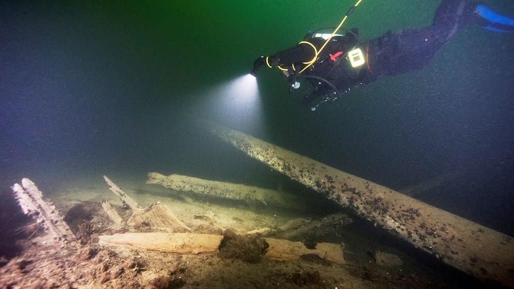 """I projektet """"Östersjöns skatter"""" har de bland annat hittat ett medeltida skepp - en kogg. Foto: Mikael Fredholm/Statens maritima museer."""