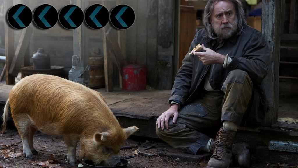 Nicolas Cage spelar huvudrollen i Pig. Han sitter smutsig, långhårig och skäggig intill en gris.