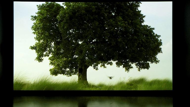 """Ur utställningen """"The sovereign forest""""."""