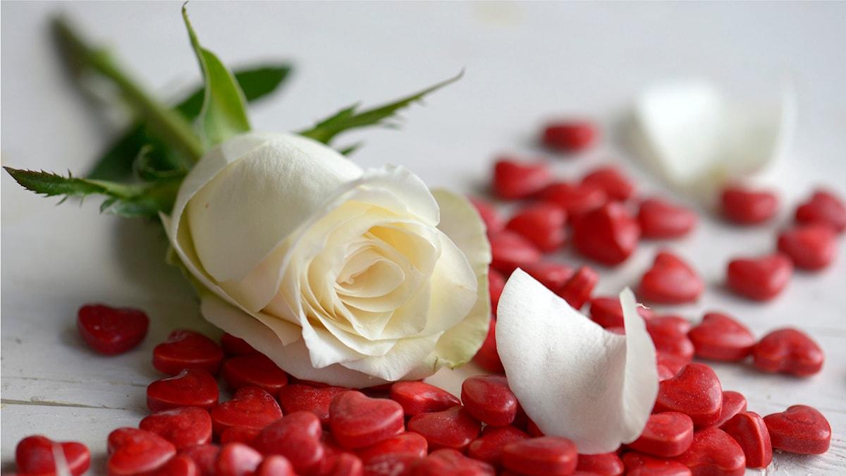 Blommor och hjärtan. Foto: Janerik Henriksson / TT