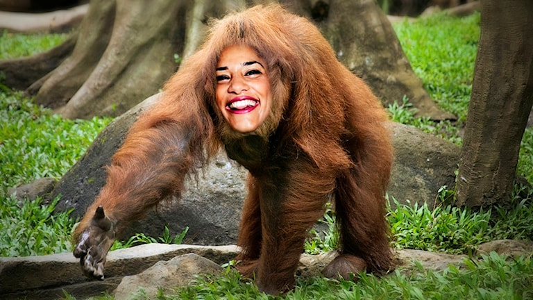 Er orangutang ströcker fram handen som för att hälsa. Mitt i ansiktet har vi redigerat in en bild på Farah som ler.