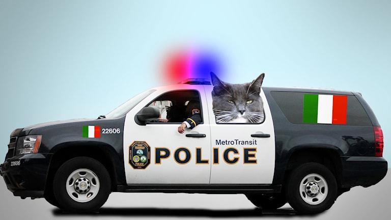 En stor polisbil med en butter katt som tittar ut ur bakrutan. Polisbilen har italienska flaggor på sidan och ett rejält blåljus påslaget på taket.