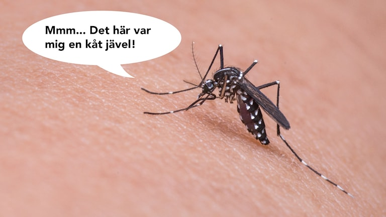 Kåt och mygga