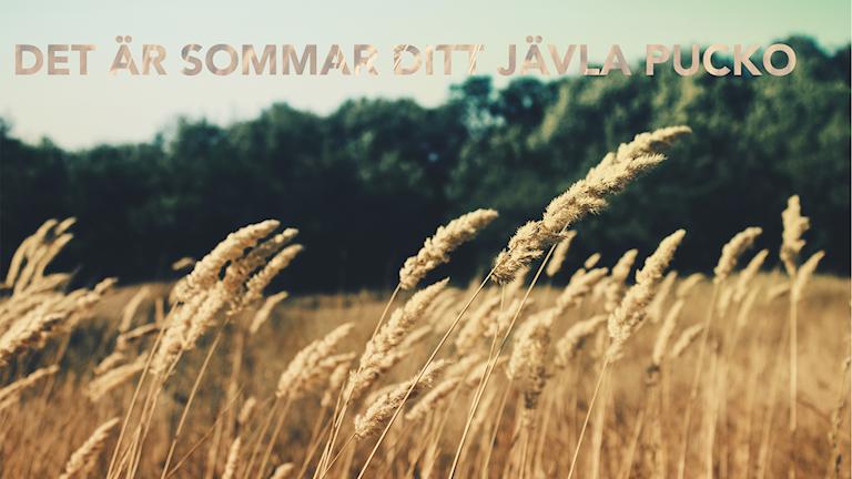 Sommar trots allt