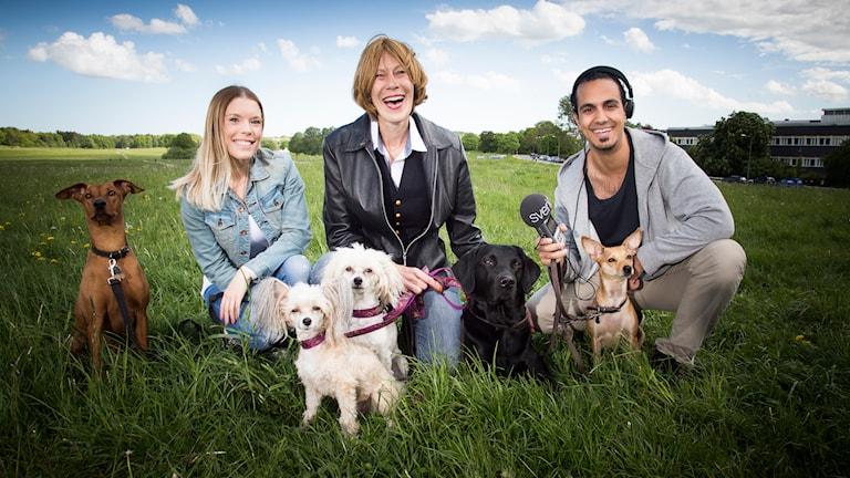 Maria Hedqvist, Eva Bodfäldt och Gurgin Bakircioglu samt fem hundar. Foto: Mattias Ahlm/Sveriges Radio