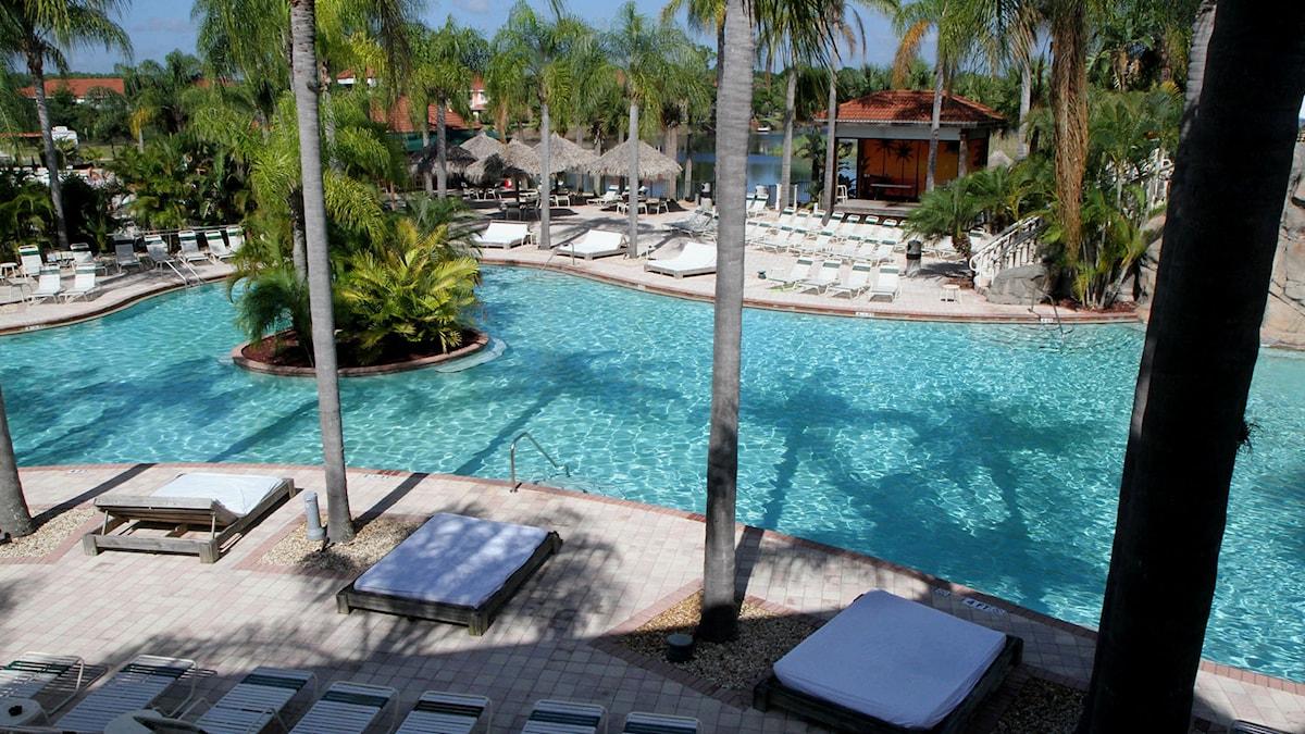 Bild av solstolar, palmer och en pool. Foto: Andy Jones/TT