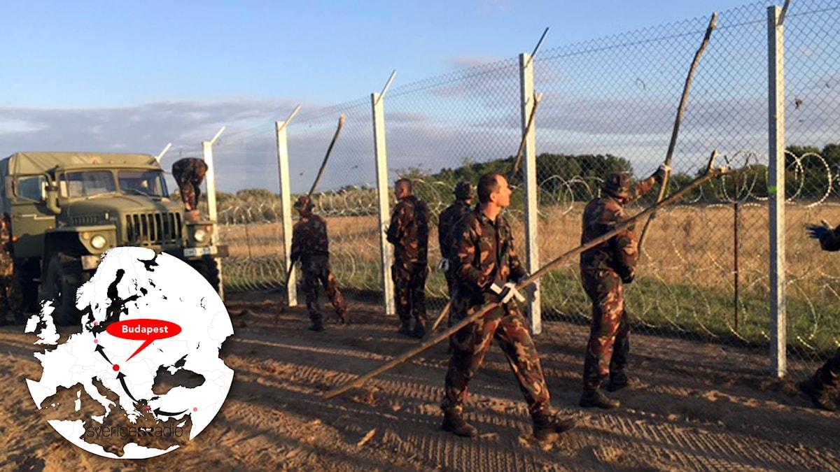 Uniformsbeklädda män stöttar upp ett stängsel med pinnar. Foto: Johan-Mathias Sommarström/Sveriges Radio.