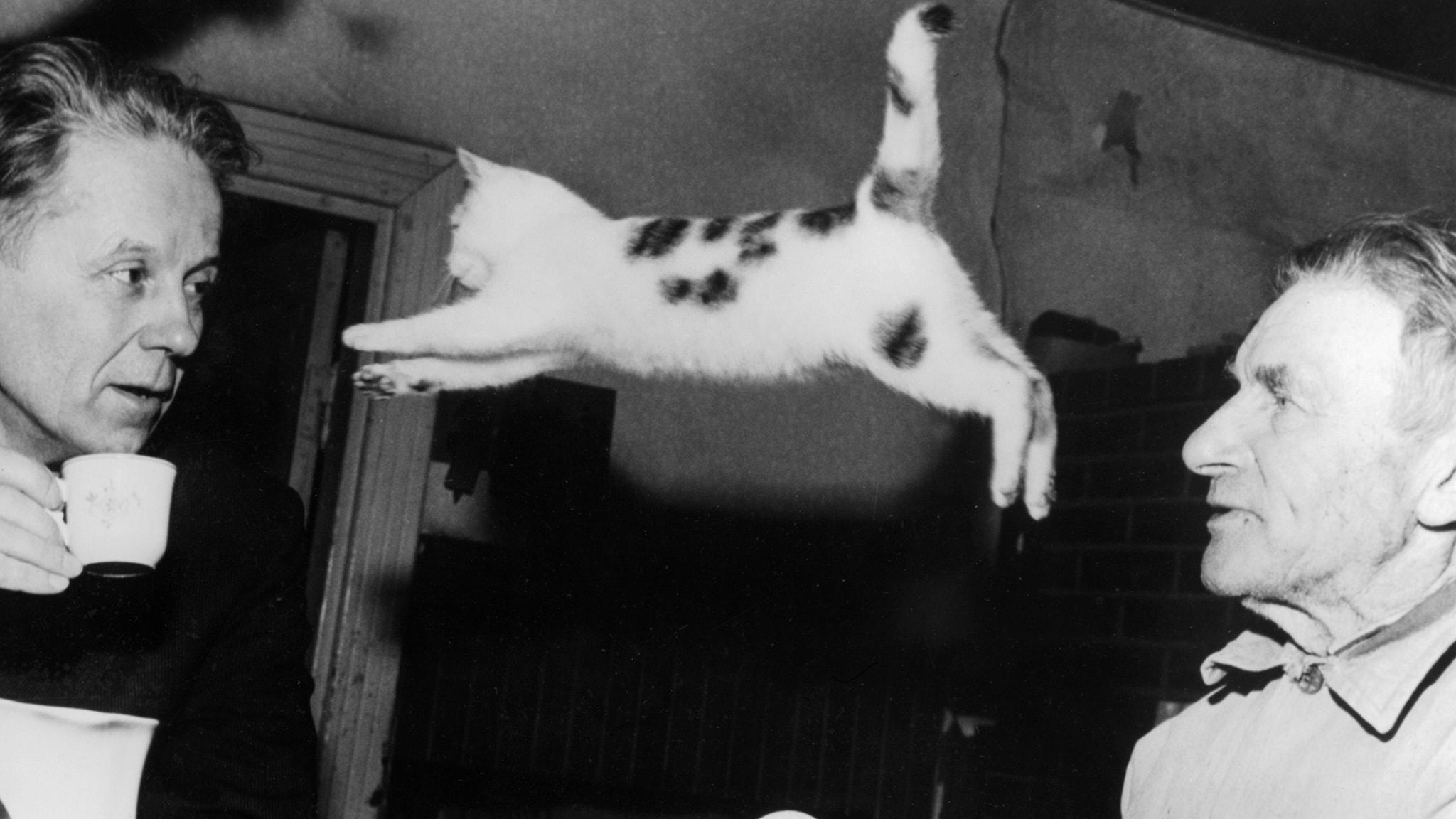 Kissan kyydissä