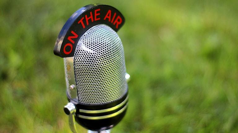 En mikrofon på en gräsmatta.