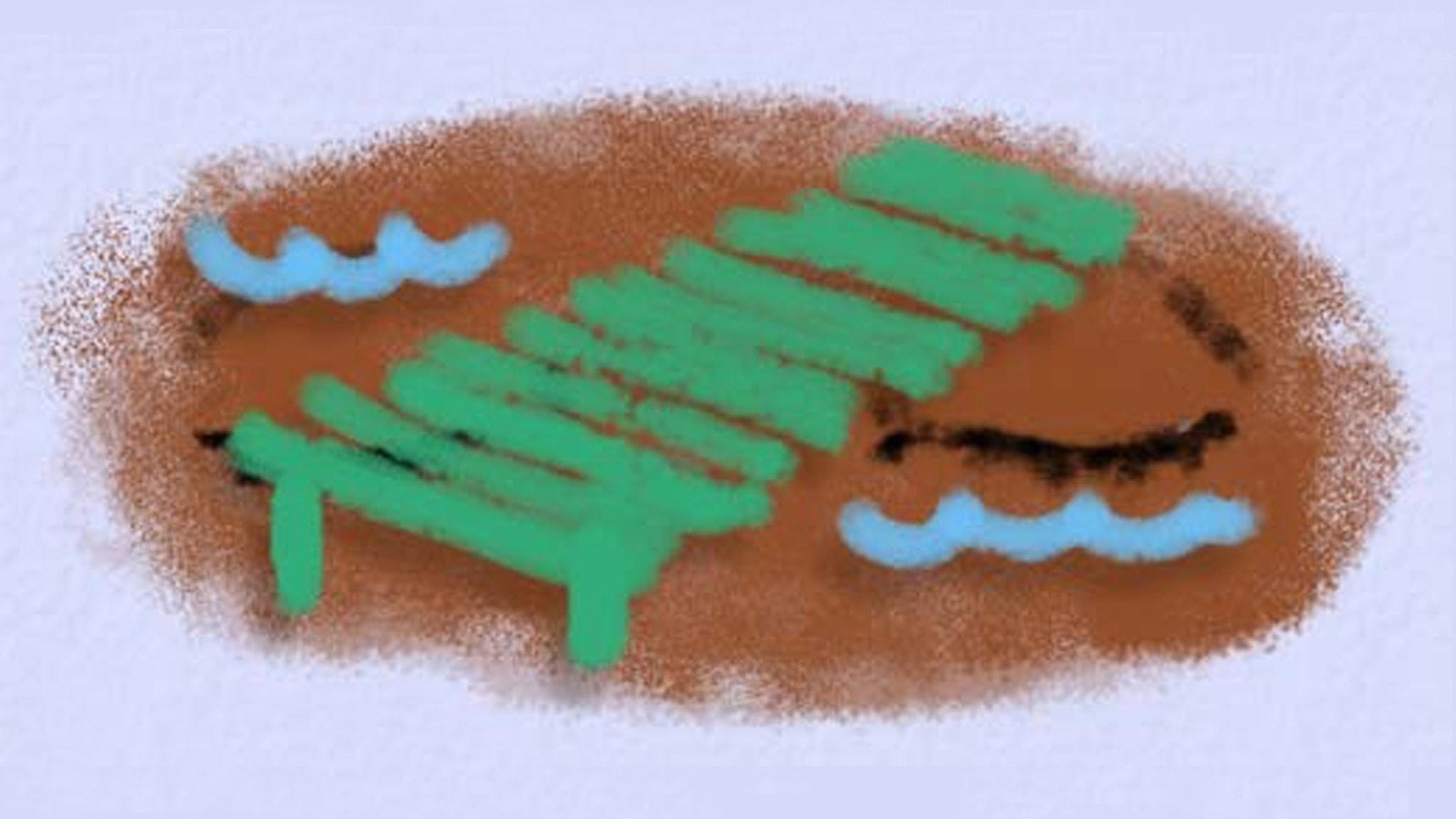 Fantasiresor del 3, 2012: Släktingarna. Illustration: Ingrid Flygare/Sveriges Radio