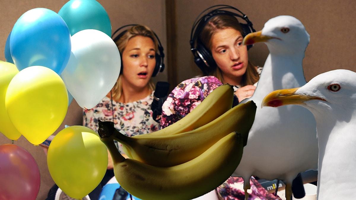 Ballonger bananer och fiskmåsar