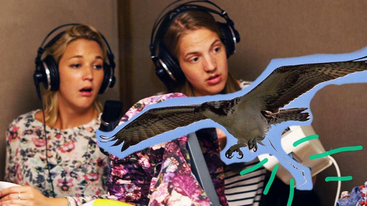 FÅGEL flyger i studion och bajsar
