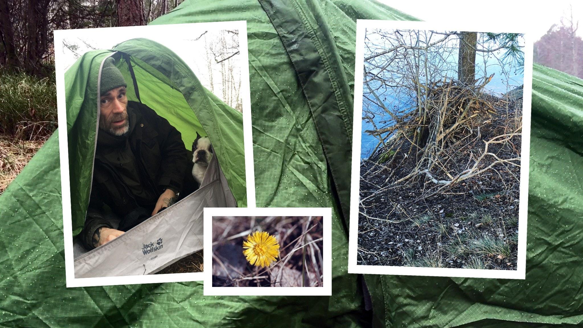 Jonas och hunden Puck har sovit i tält och vaknar upp vid en sjö där de hittar tussilago och en bäverhydda.