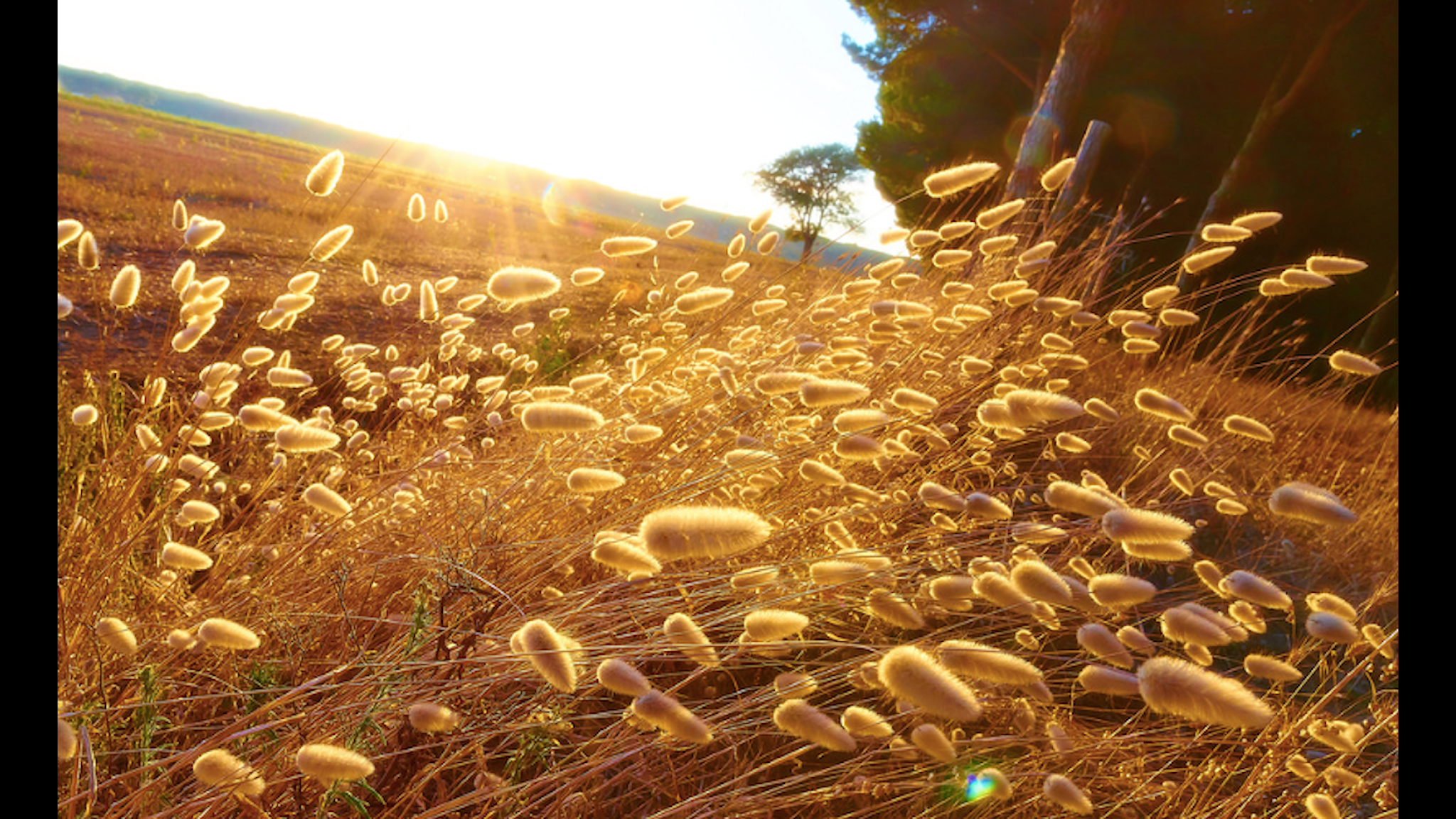 Foto: Moyan Brenn Flickr Creative Commons
