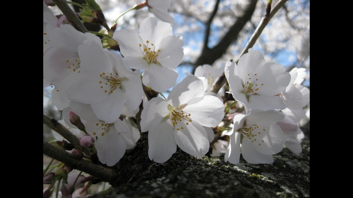 Vårens första blommor