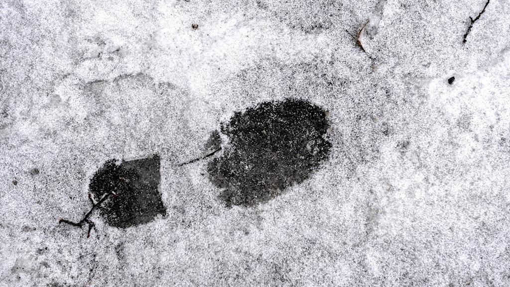 Bilden visar ett skoavtryck i snö.