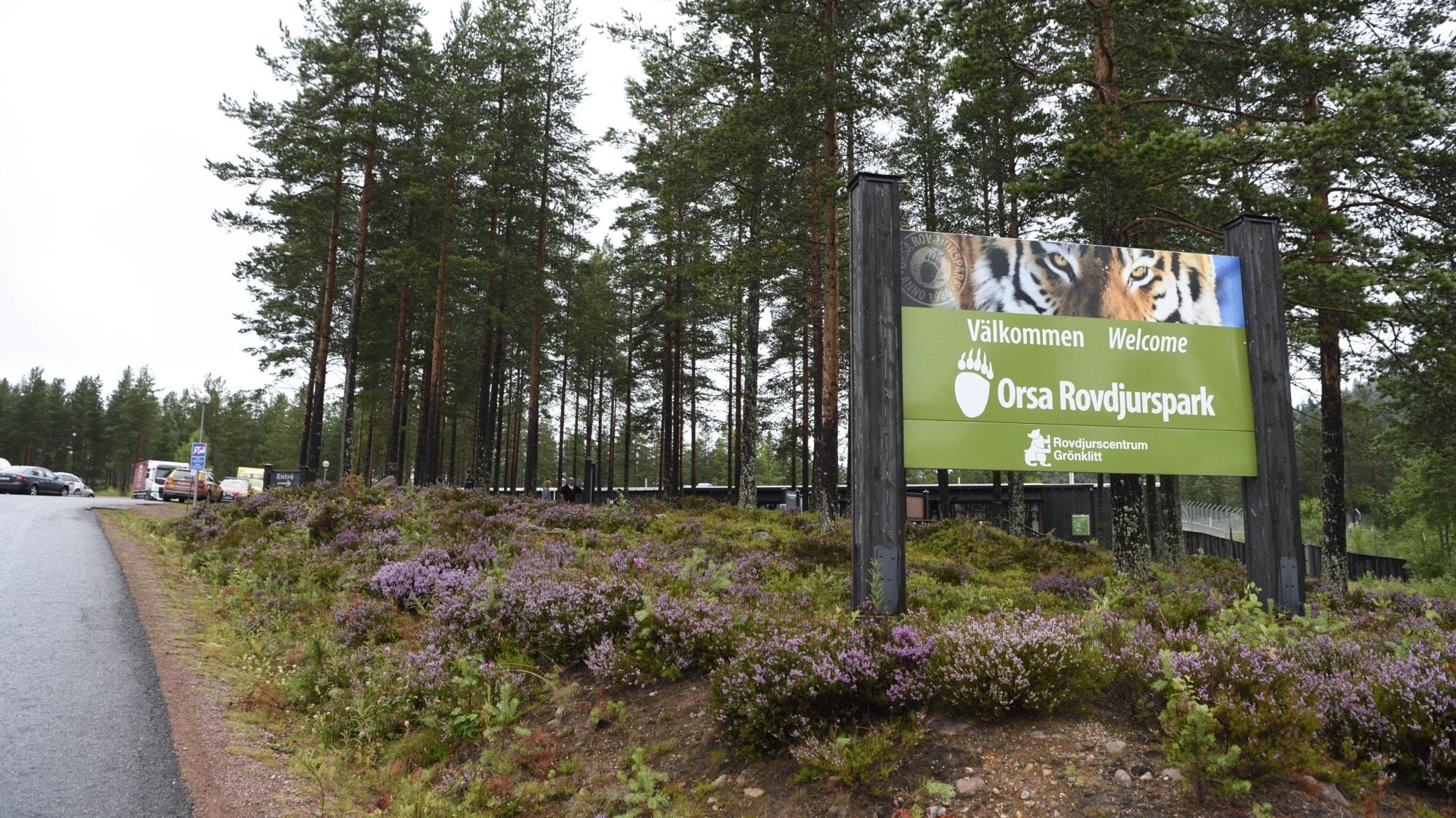Orsa Rovdjurspark i Dalarna. Djurparkens tidigare chef döms för brott, efter att en djurskötare blev dödad av en björn 2017.