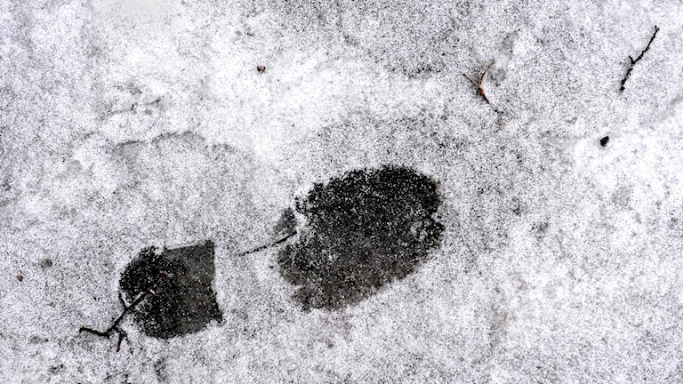 Ett skoavtryck i snö.