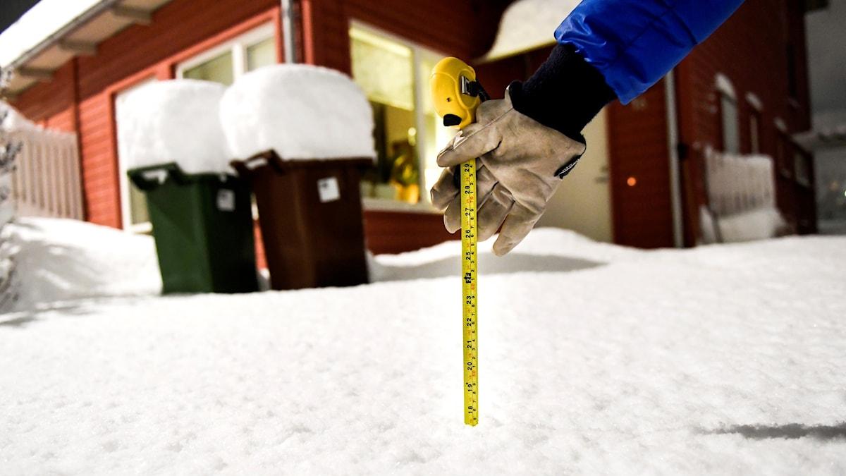 En man mäter snödjupet med ett måttband.