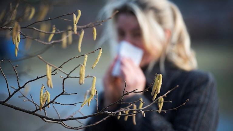 En allergisk kvinna snyter sig under björkpollensäsongen.