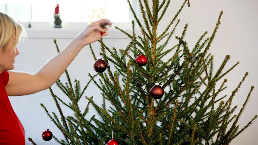 En kvinna klär en julgran.