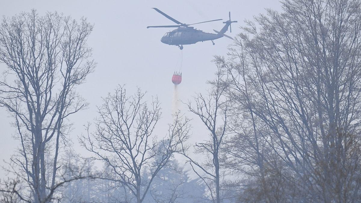 En helikopter häller vatten på skogsbranden i Hästveda i Skåne.