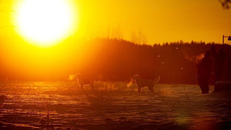 Två personer och två hundar på en snötäckt yta. En sol lyser på dem.