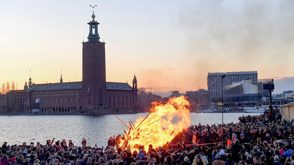 Stockholmare har samlats vid en majbrasa på Riddarholmen i centrala Stockholm för traditionsenligt valborgsfirande.
