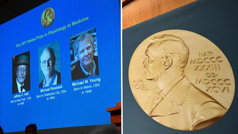 Jeffrey Hall, Michael Rosbash och Michael Young får Nobelpriset i medicin.
