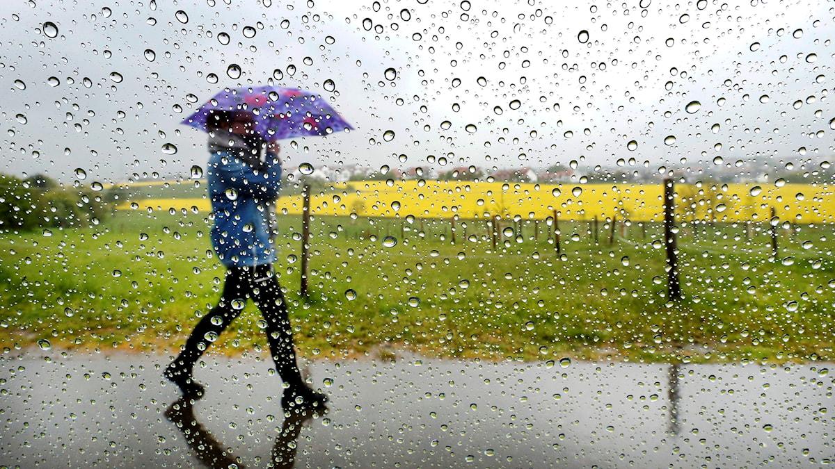 Person med paraply i regn. Foto: Michael Probst/TT
