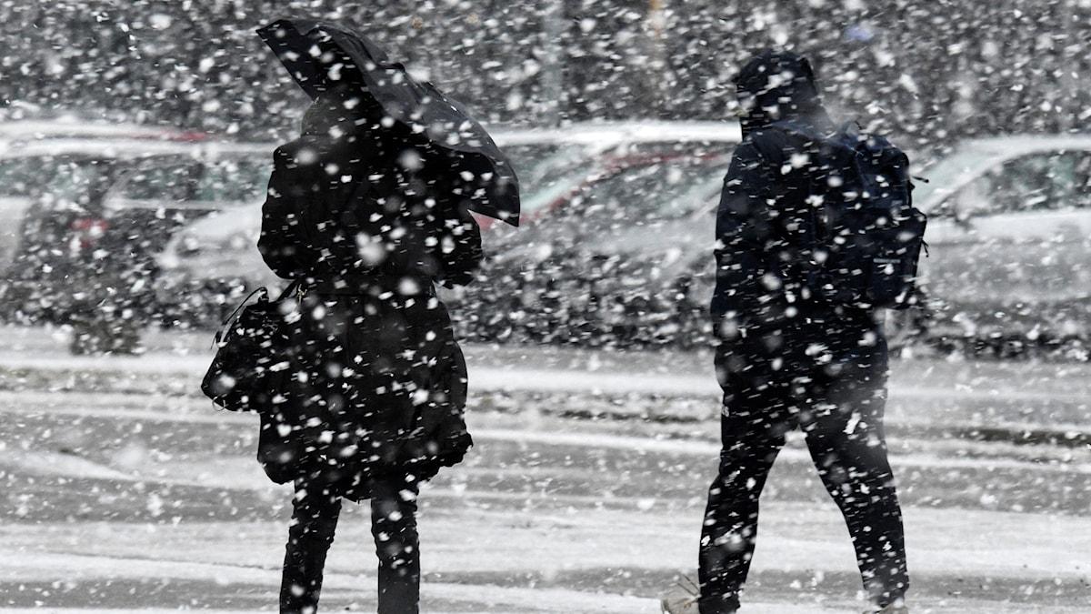 Gående i det ymniga snöfallet i Malmö vid lunchtid på onsdagen.