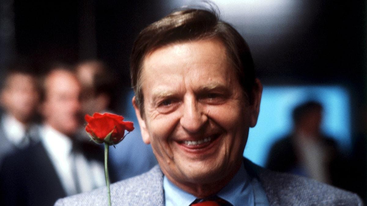 Olof Palme med en röd ros. Foto: TT