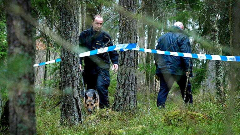 Polisen undersöker en brottsplats. Foto: JACK MIKRUT/TT