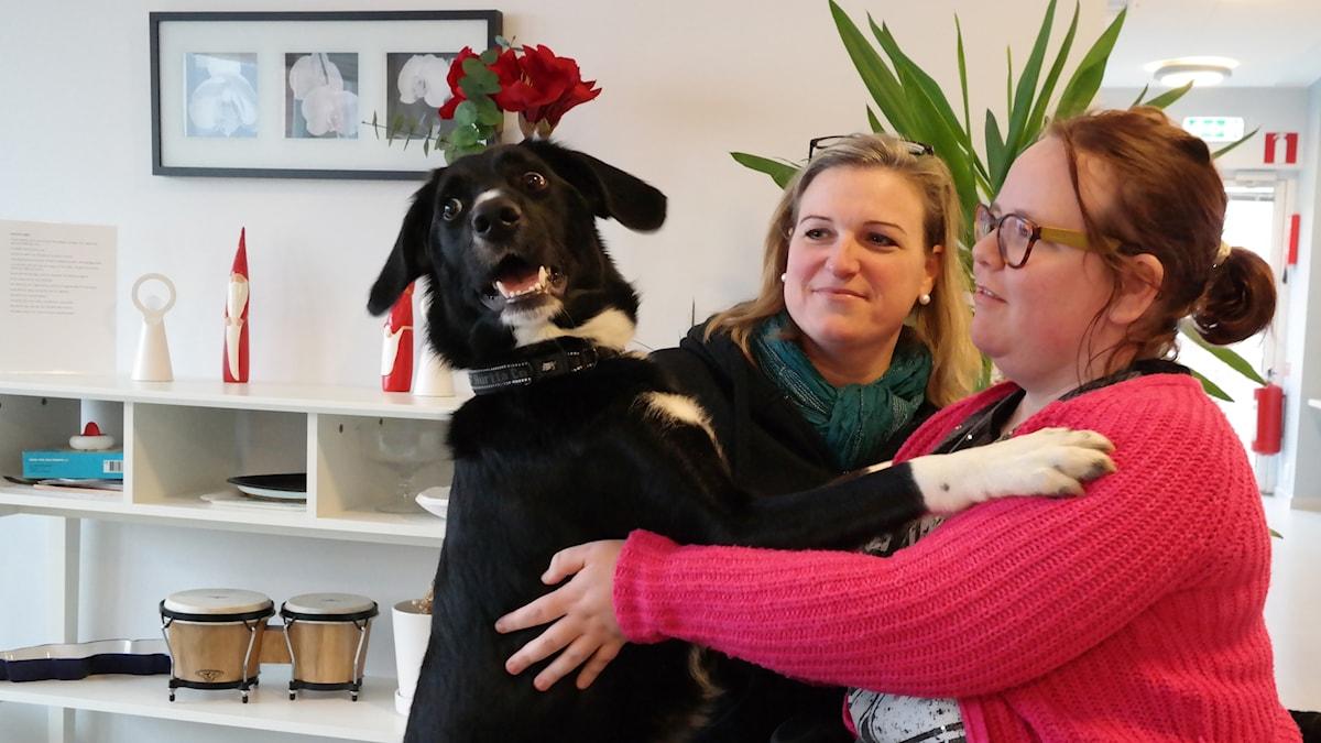 Familjehunden Sammi bor på ett LSS-boende i Helsingborg och hans närvaro sprider stor glädje.